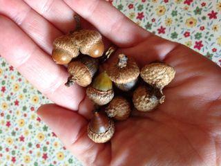 Photo acorns
